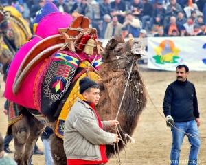 camel details