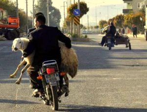 common sight in rural areas during the Kurban Bayrami