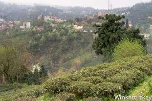 Vista desde la sede de Çaykur en Rize