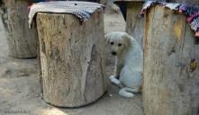 perrito que nos encontramos en el jardín de té