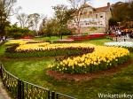 Tulipanes Estambul 2014