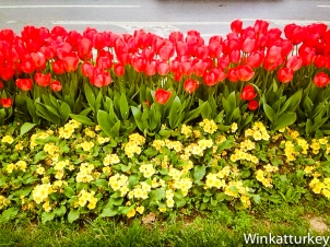 Tulipanes en Besiktas
